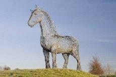 Heavy horse0085