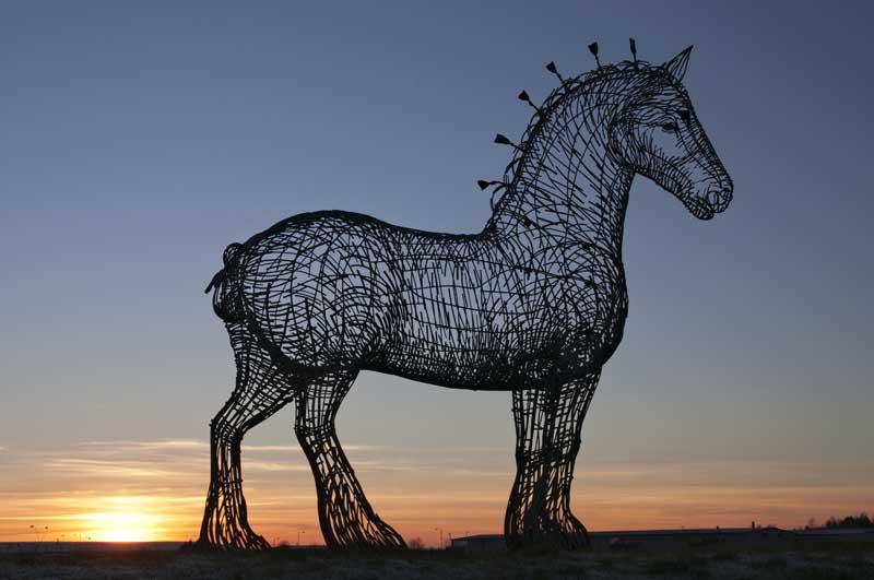 Heavy horse0111