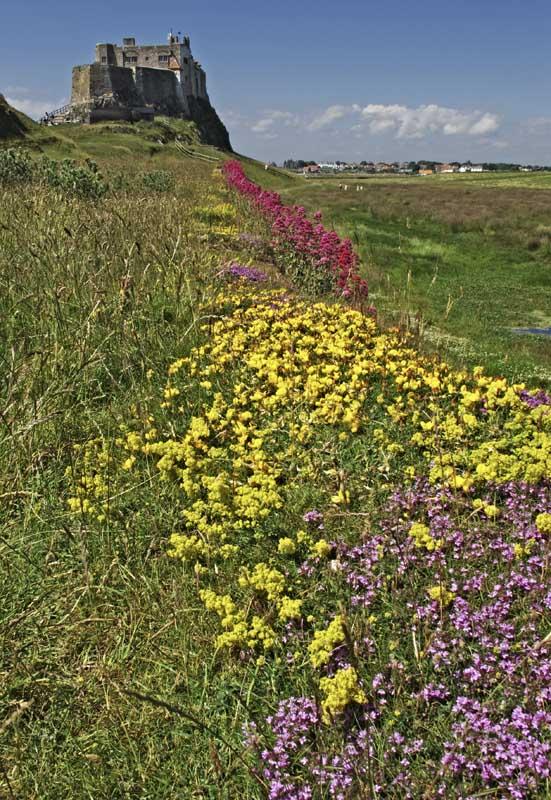 Lindisfarne castle in bloom0067