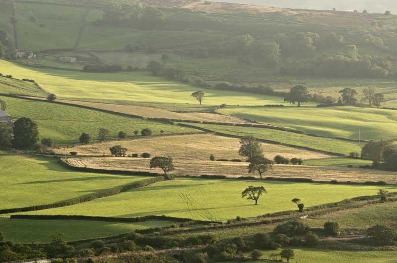Meadow evening0020