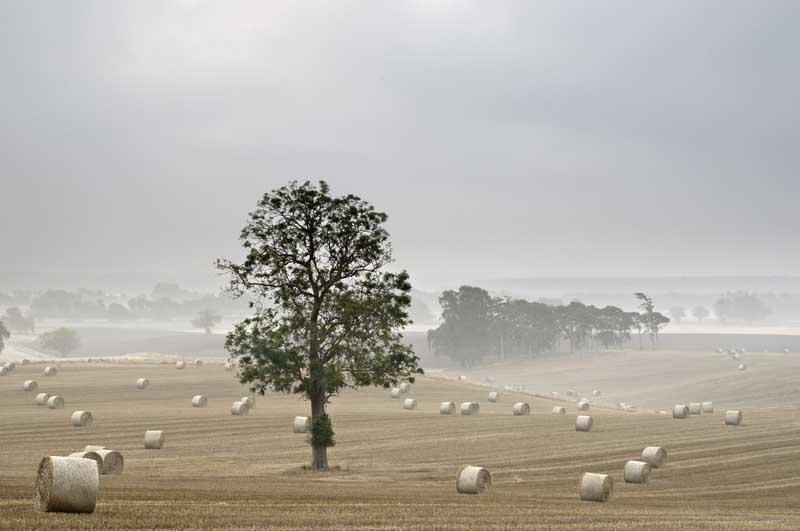 Misty harvest morning0013