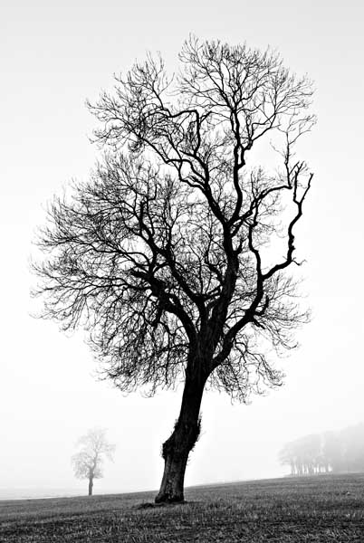 Misty tree0009b&w