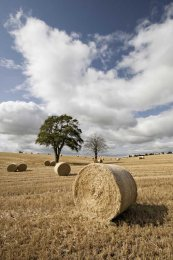 Straw bales and trees0038