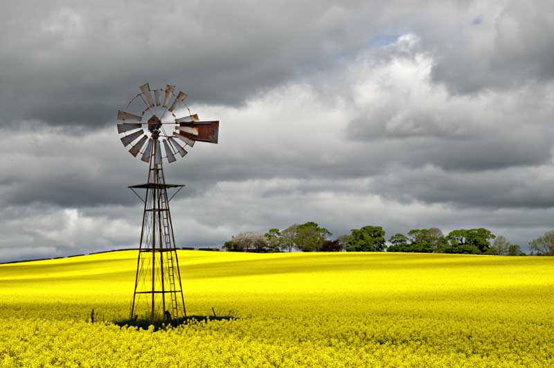 Wind pump in rape field0029
