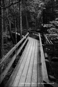 Crawford Woods, Toronto,Canada