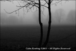 Trees in Fog at Civil Service Football Grounds