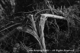 A broken tree...