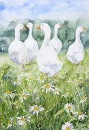 Chamomile Geese 1