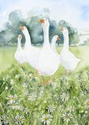 Chamomile Geese 2