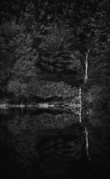 Birch at the waters edge