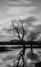 Trees on the Towy