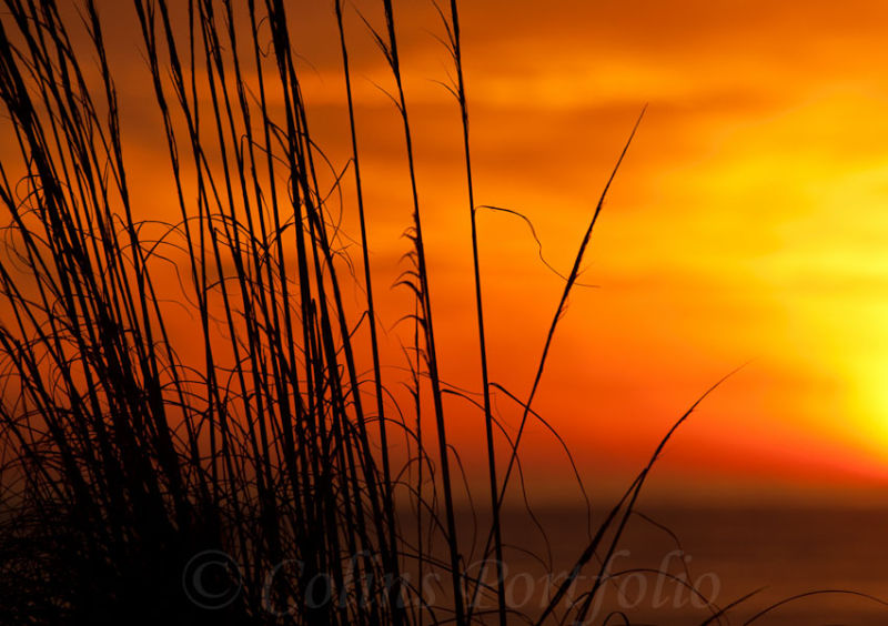 Grass in the Florida sunset