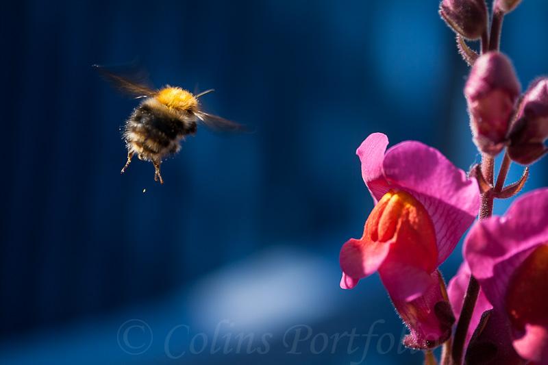 'Gathering the nectar....'