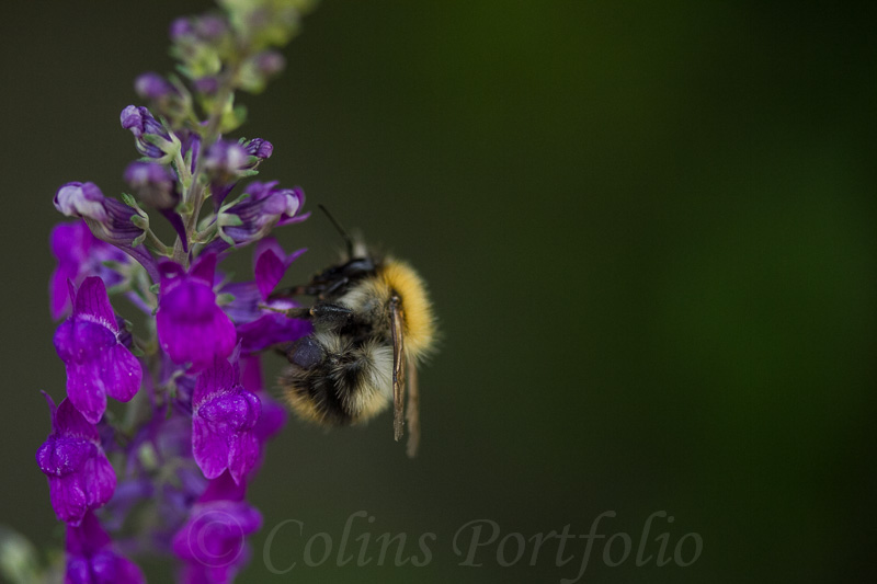 Busy collecting nectar