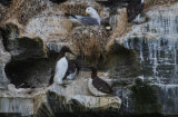 A close up of the birds on the cliff edge
