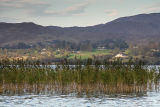 The reeds on Lough Eske
