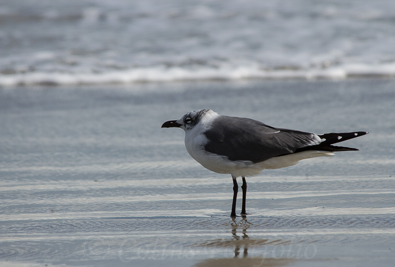 Gull resting on the shore