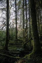 First forest light
