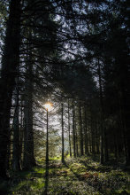 Light breaking through the forest