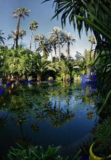 Majorelle garden 5