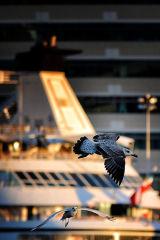 Ships 'Gull'ery