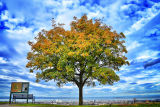 Tree of Scotland