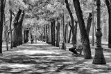 Boulevard shadows