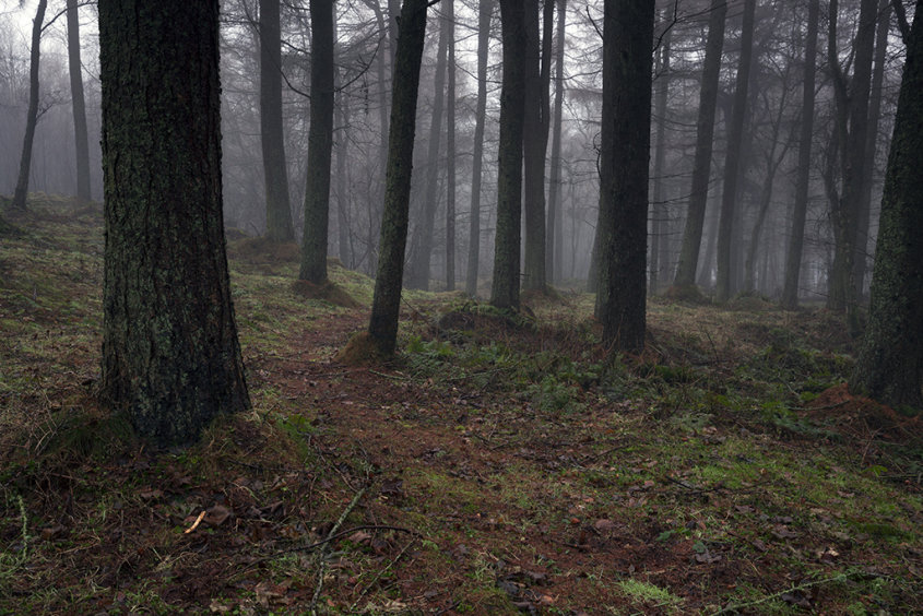 a path in the fog