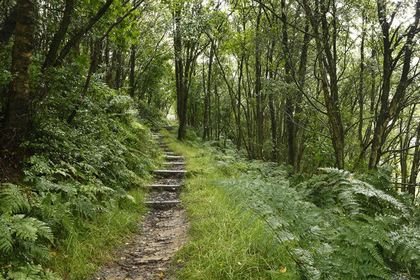a path through the green