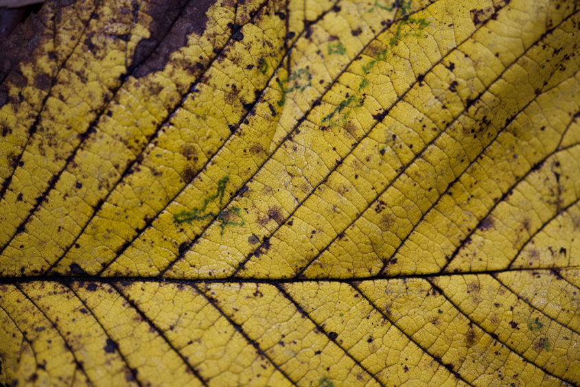 autumn decay