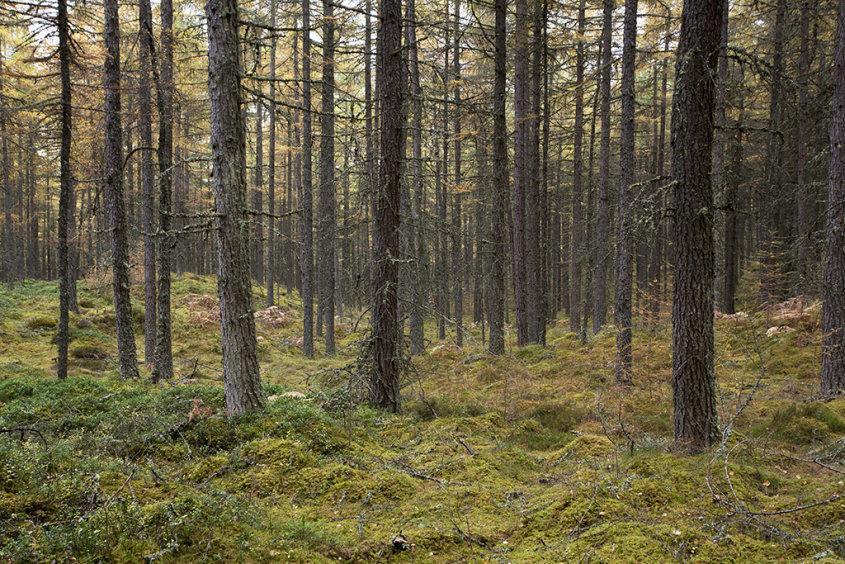 baluain woods