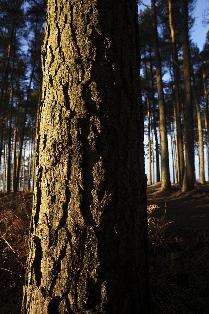 bark detail, drumoak