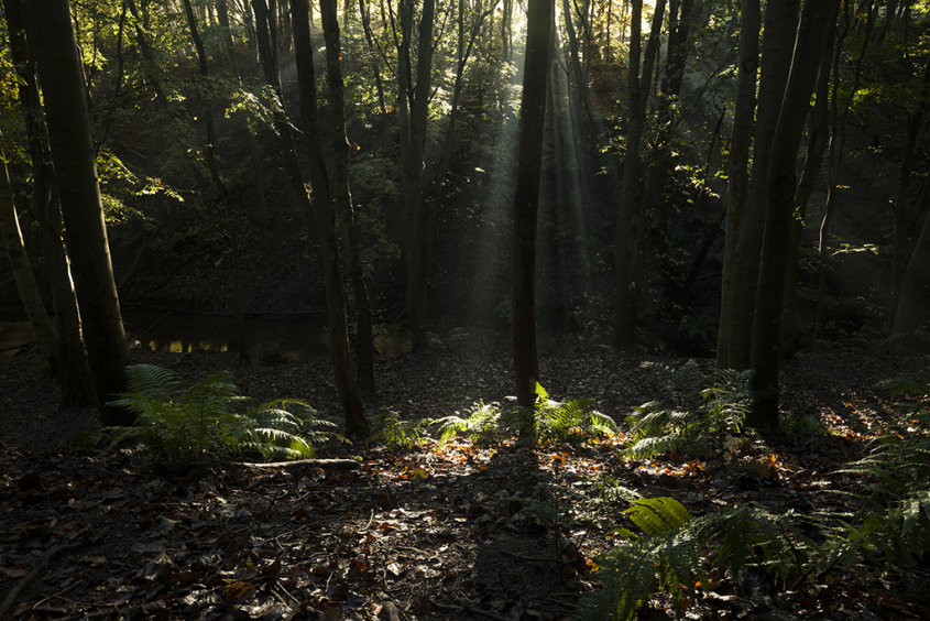 broken light, dunnottar woods
