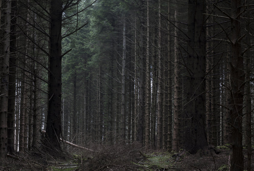 clearing, kirkhill forest