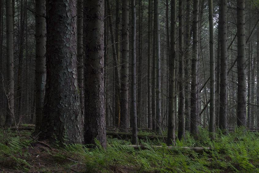 craigie woods