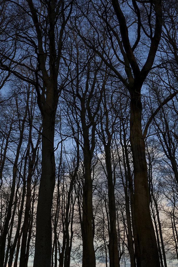 crombie woods