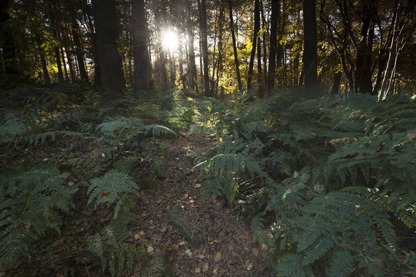 ferns find the light