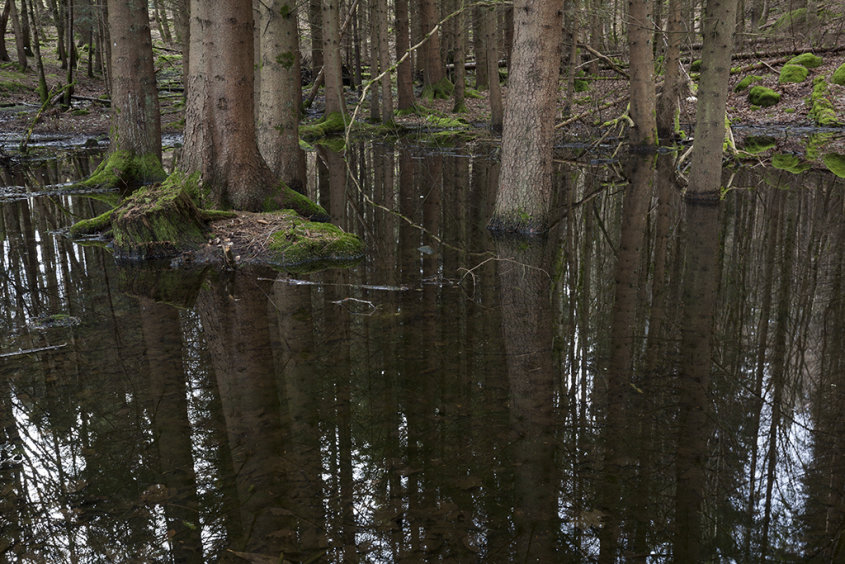 flooded forest, crathes
