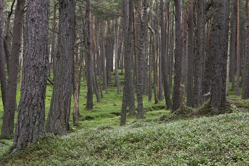 loch muick forest