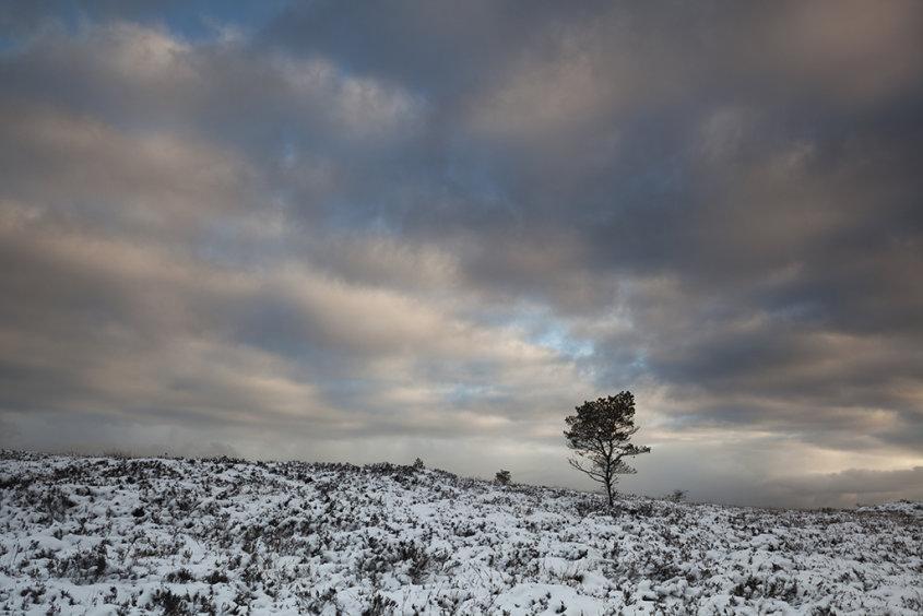 lone tree, millstone hill