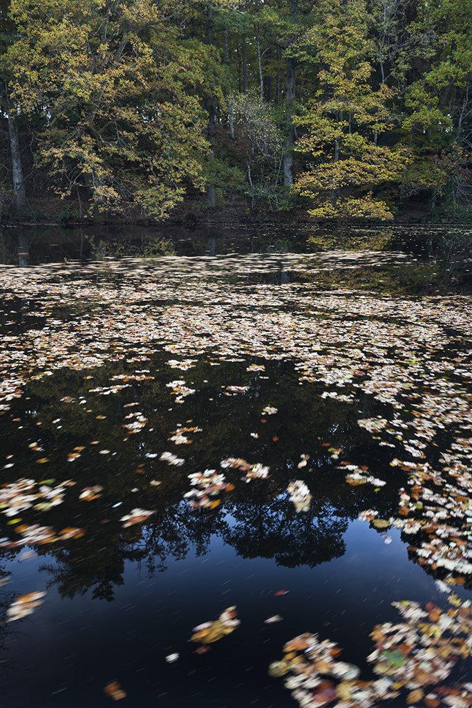 mill pond, crathes