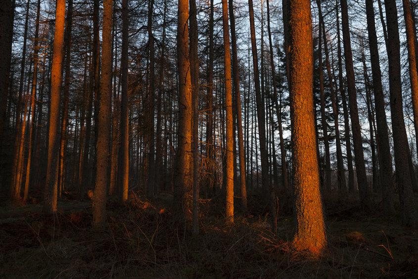 orange glow, foggieton woods
