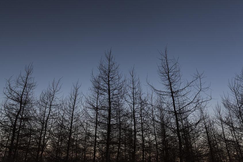 pitfichie forest