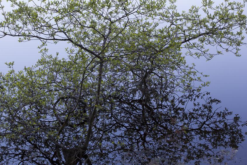 reflection, loch faskally