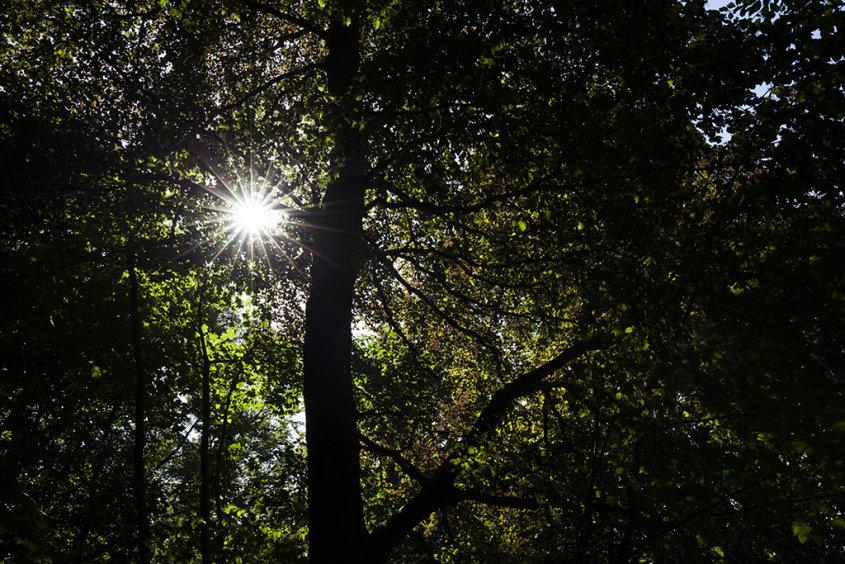 sunburst, fyvie woods