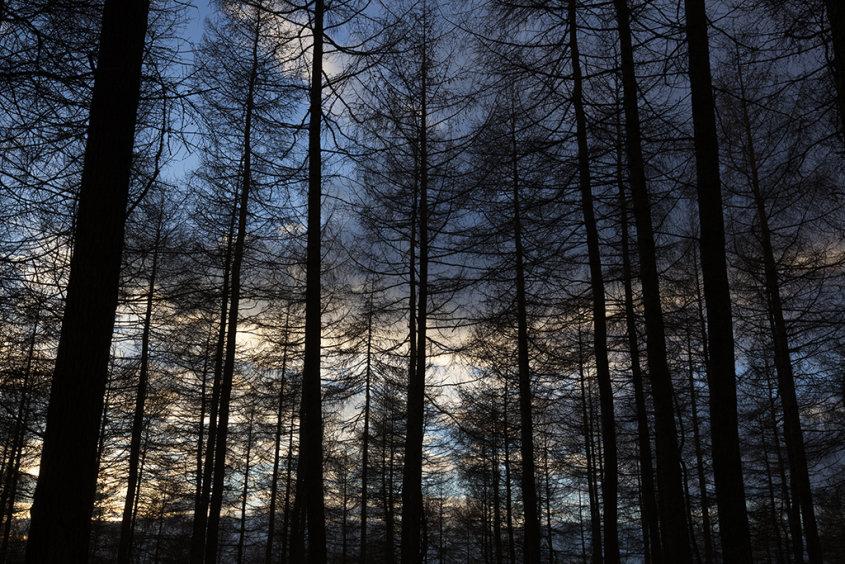 sunset, countesswells woods