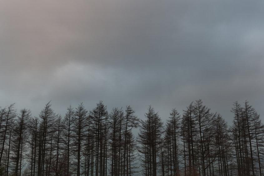 sunset, kirkhill forest