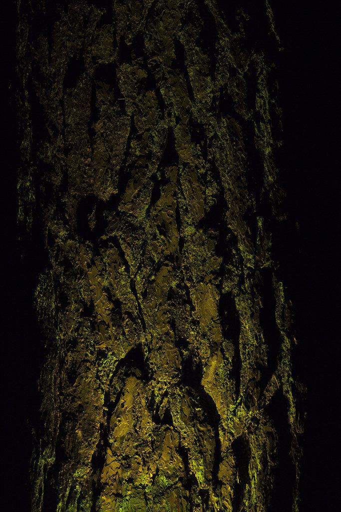 torchlit trunk