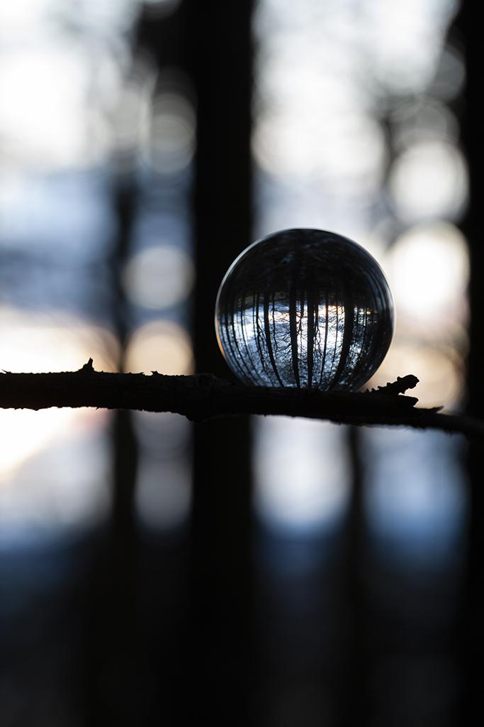 twilight, bruntyairds woods
