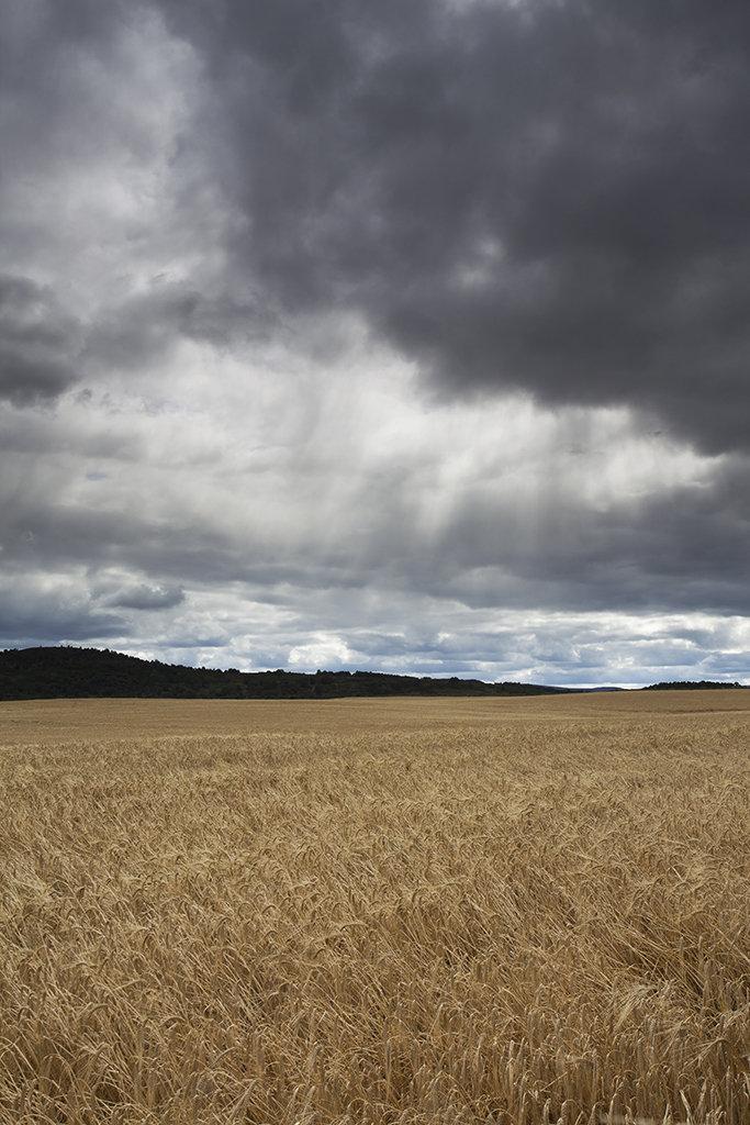 wheat field, tarland